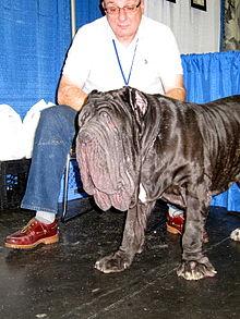 Des races de chiens en surtype