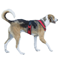 Harnesses Collars And Leashes