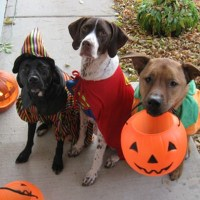 halloween border with dogs