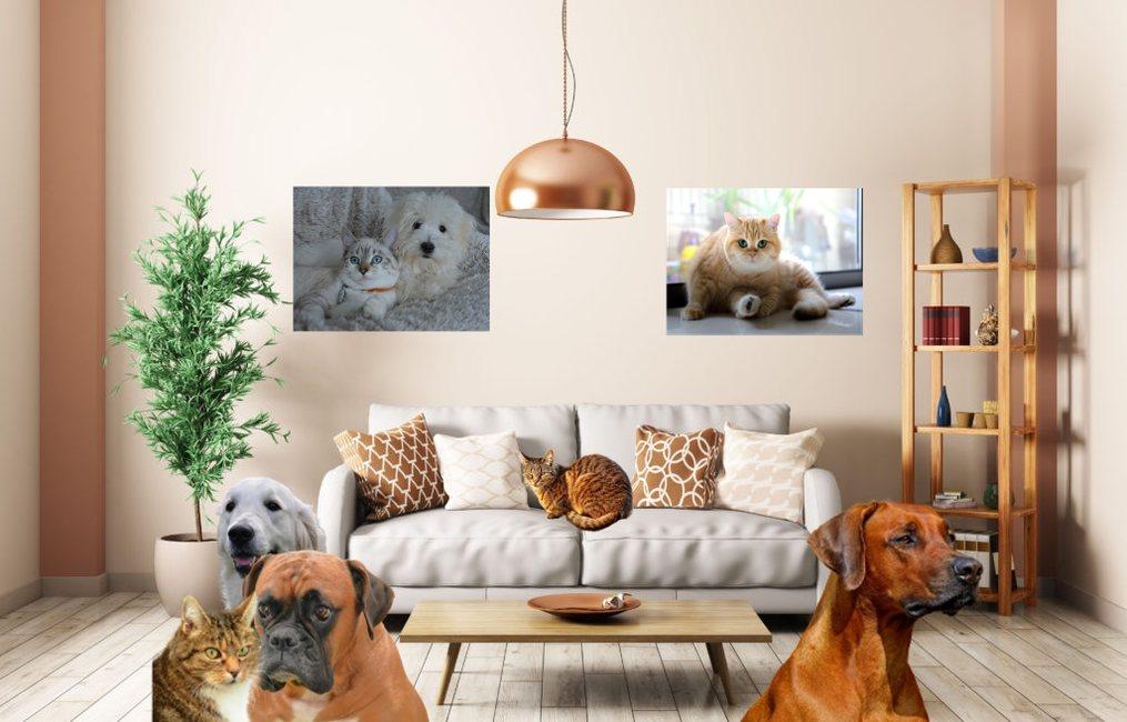 Home 145 » Pets Impress