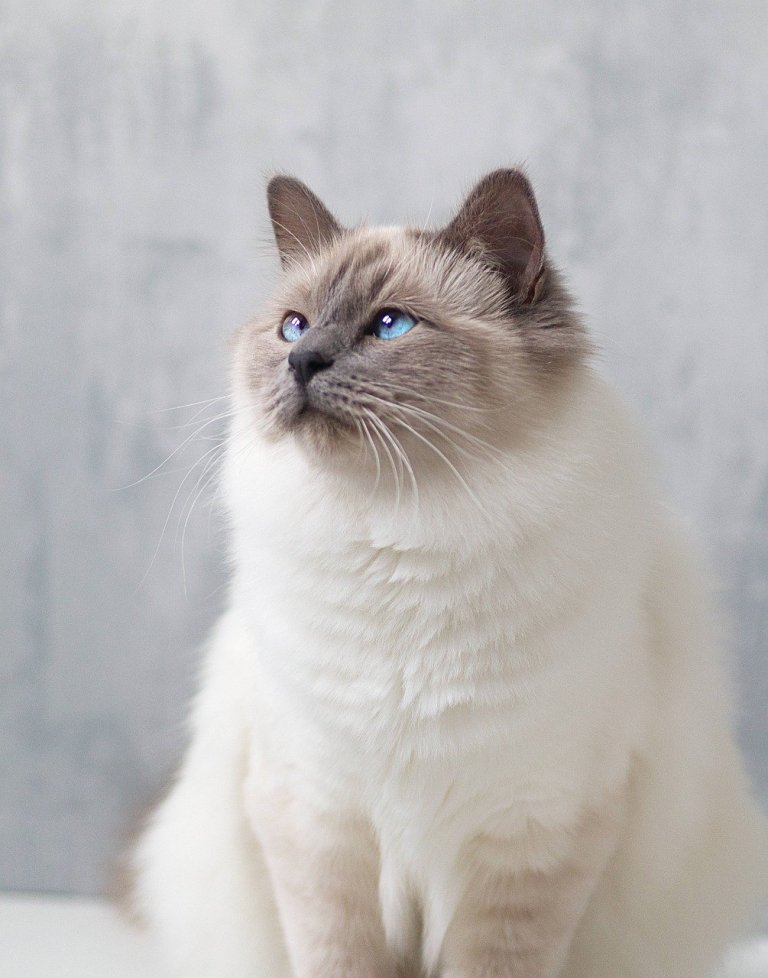 10 Cutest cat breeds perfect for adoption in 2021. https://www.petspalo.com/