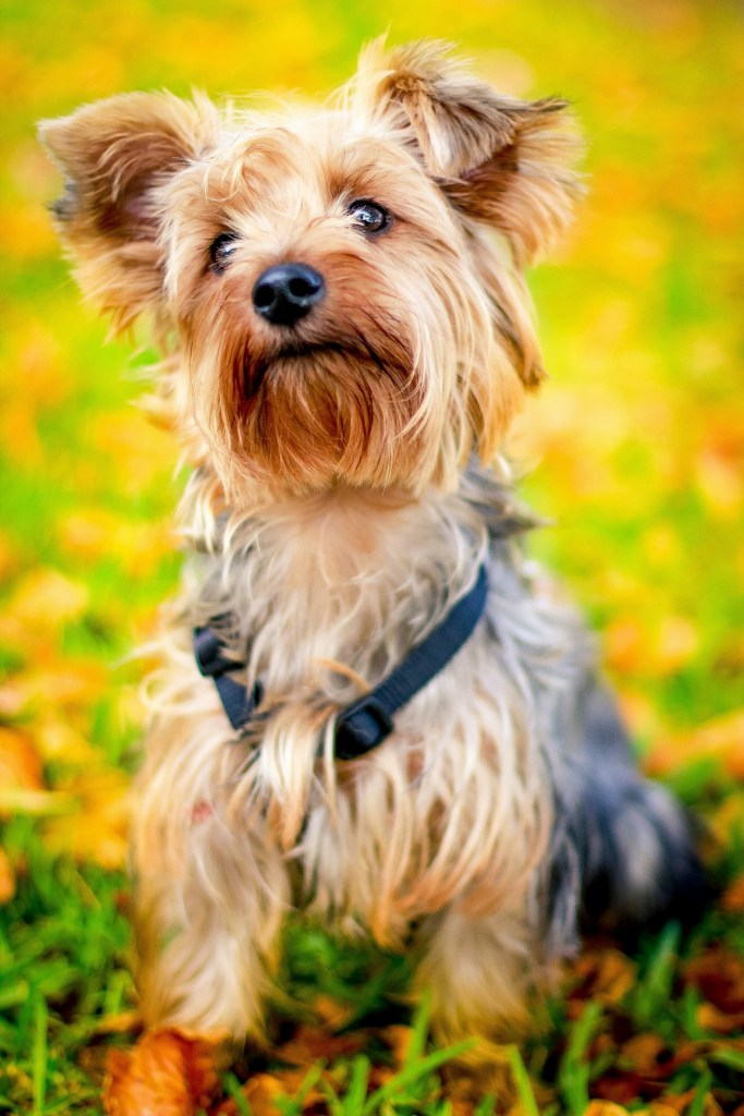 10 Cutest dog breeds perfect for adoption. https://www.petspalo.com