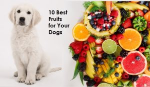 10 Best Fruits for Your Dogs. https://www.petspalo.com/