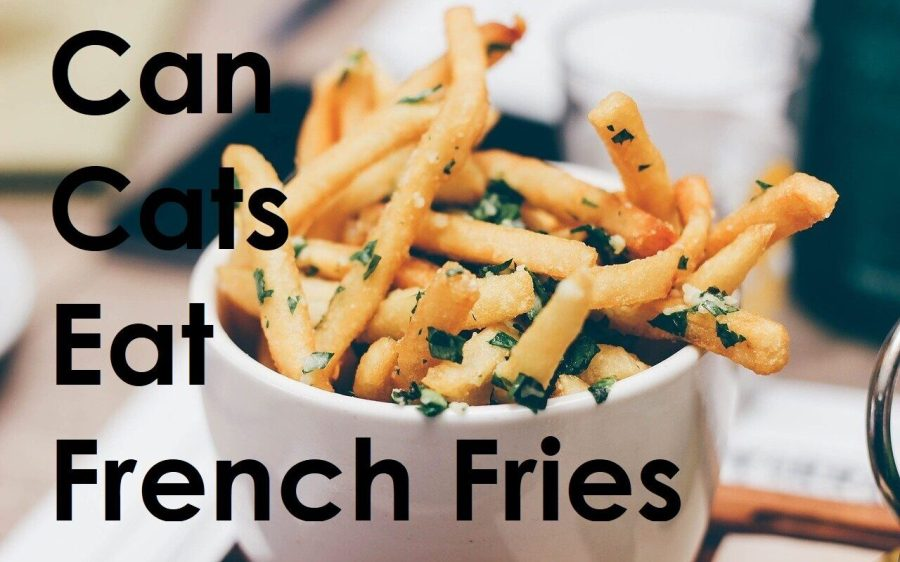 Can Cats Eat French Fries