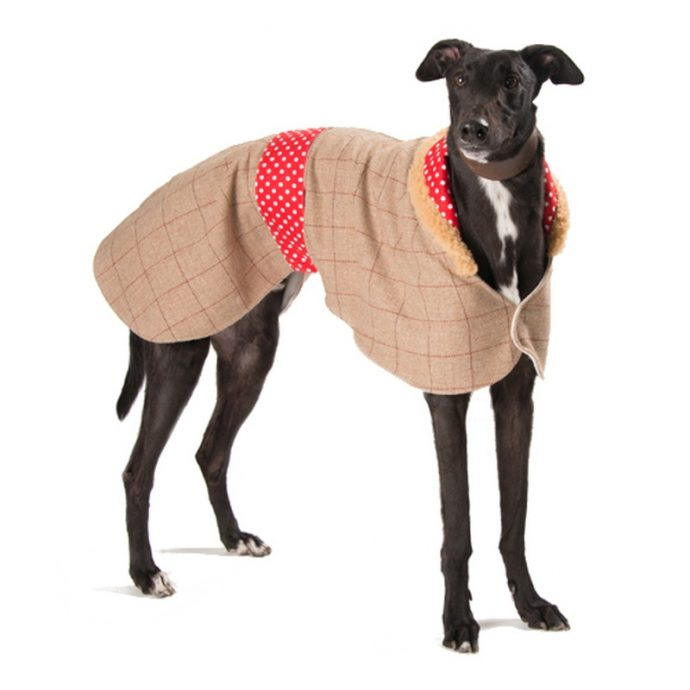 Do you think your dog really needs a coat or a jumper this winter  But which coat or sweater to choose  PetsPyjamas has a variety of dog coats  and sweaters to suit every breed and budget  For rainy days choose a water
