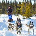 Dogsledge Drive in Sweden with Petter Karlsson, March 2013