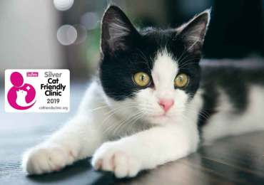 PetVet is Sri Lanka's First and Only Cat Friendly Clinic