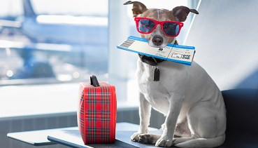 Flying with your Pet: Everything You Need To Know