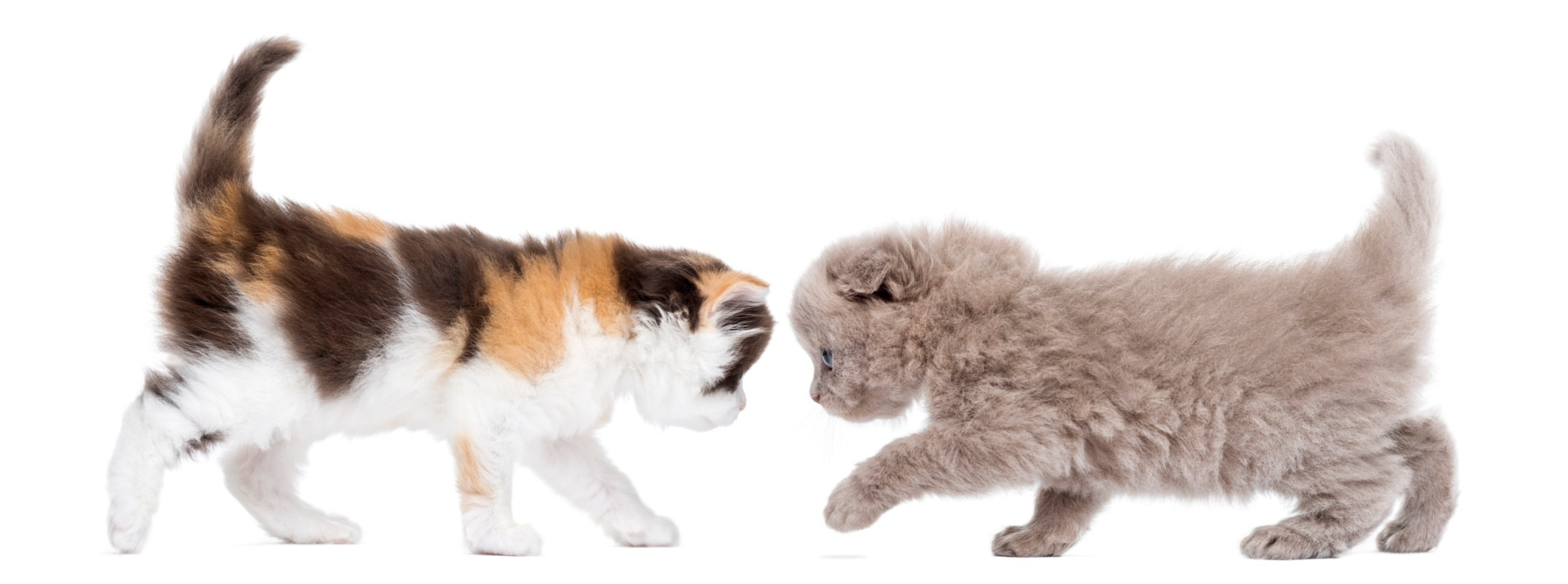 kittens facing each other