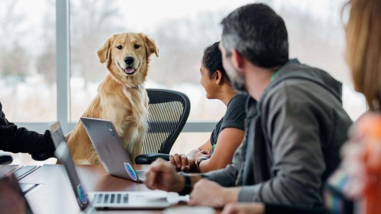 Can Dogs Understand Human Speech?