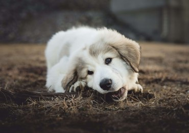 4 Reasons Why Your Dog Rips Everything