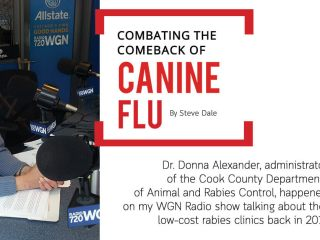 Combating the Comeback of Canine Flu