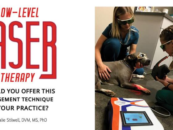 Low-Level Laser Therapy: Should You Offer This Management Technique in Your Practice?