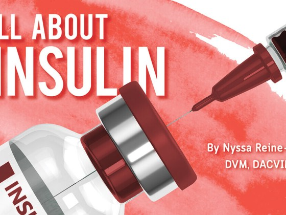 All About Insulin