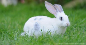 The Cost Of Keeping A Rabbit