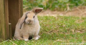 Rabbit Cages, Hutches And Equipment