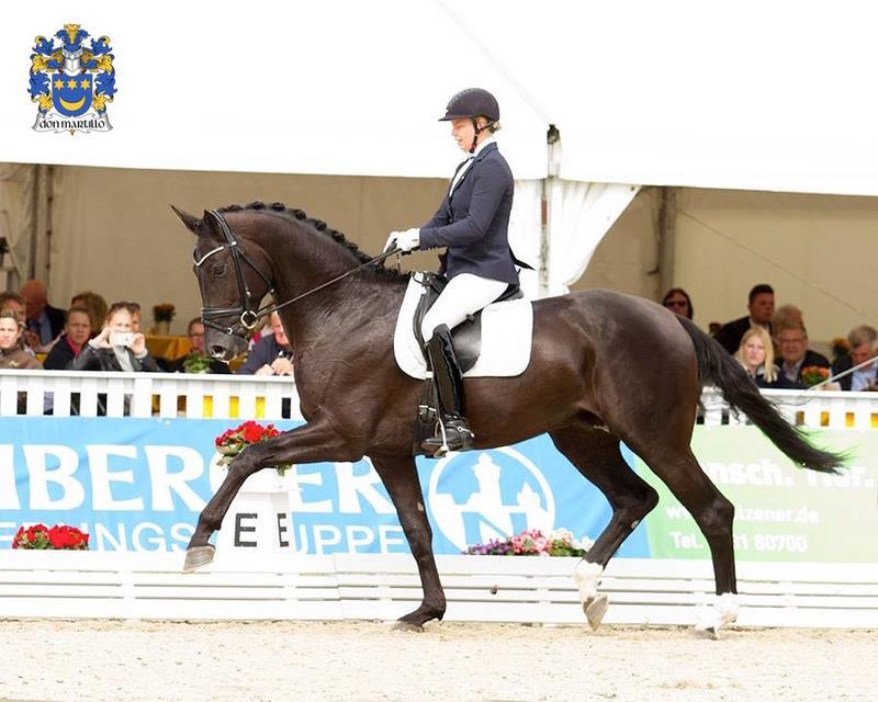 DON MARTILLO Weltmeister der 5-jährigen Dressurpferde 2017