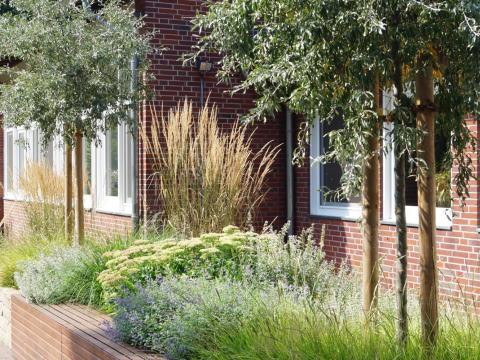 hochbeet bepflanzen stauden hochbeet mit gräsern und stauden - pflanz-konzept