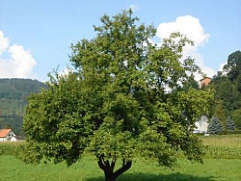 gartengestaltung obstbäume pflanzen und garten - gartengestaltung - die richtigen obstbäume