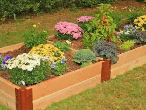 hochbeet bepflanzen stauden sommerblumen und stauden im hochbeet - pflanzenfreunde
