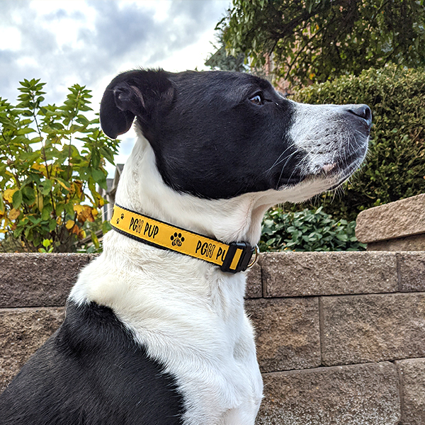 pittsburgh dog collar