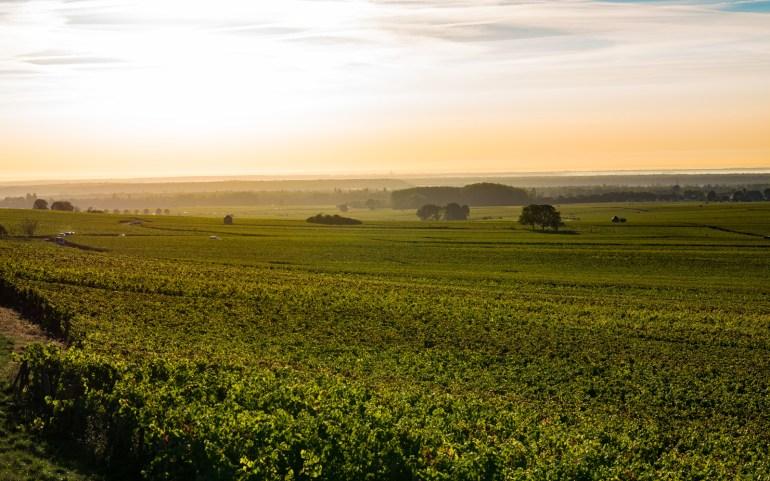 Harvest 2016 in Burgundy