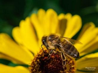 Makrofotografie: Bienchen und Blümchen 6
