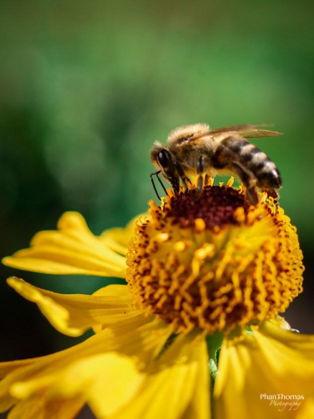 Makrofotografie: Bienchen und Blümchen 1
