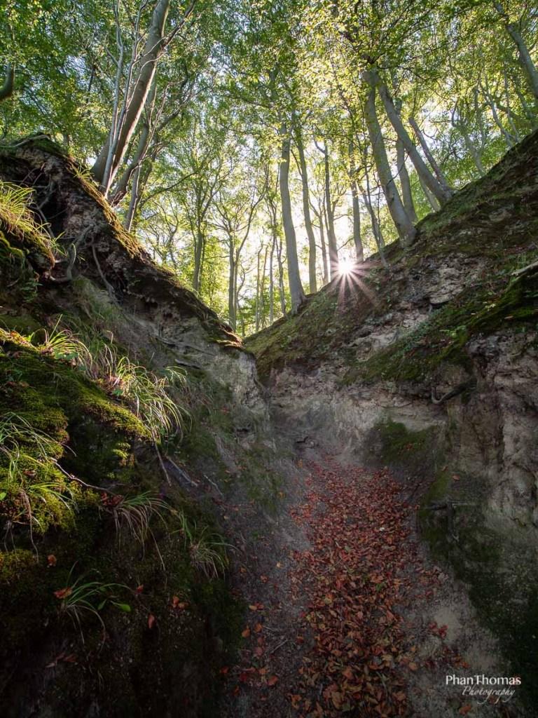 Wald mit Blendenstern
