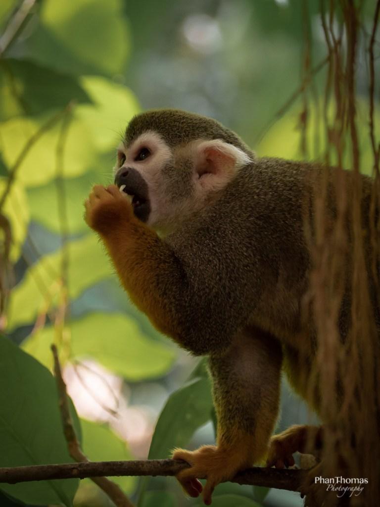 Leizpiger Zoo: Totenkopfäffchen im Schatten