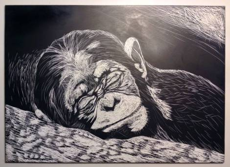 sleeping-monkey