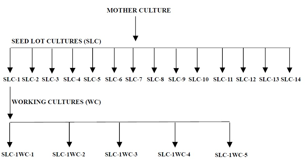 Schematic Flow for Sub Culturing