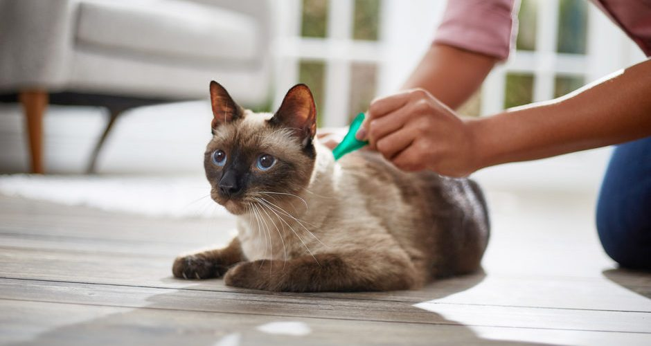 How does flea medicine work