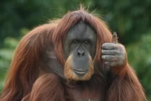 Attitude Adjustment - Thumbs up Human