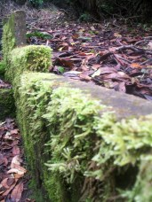 Moss on stones, footpath in Tandle Hill Park
