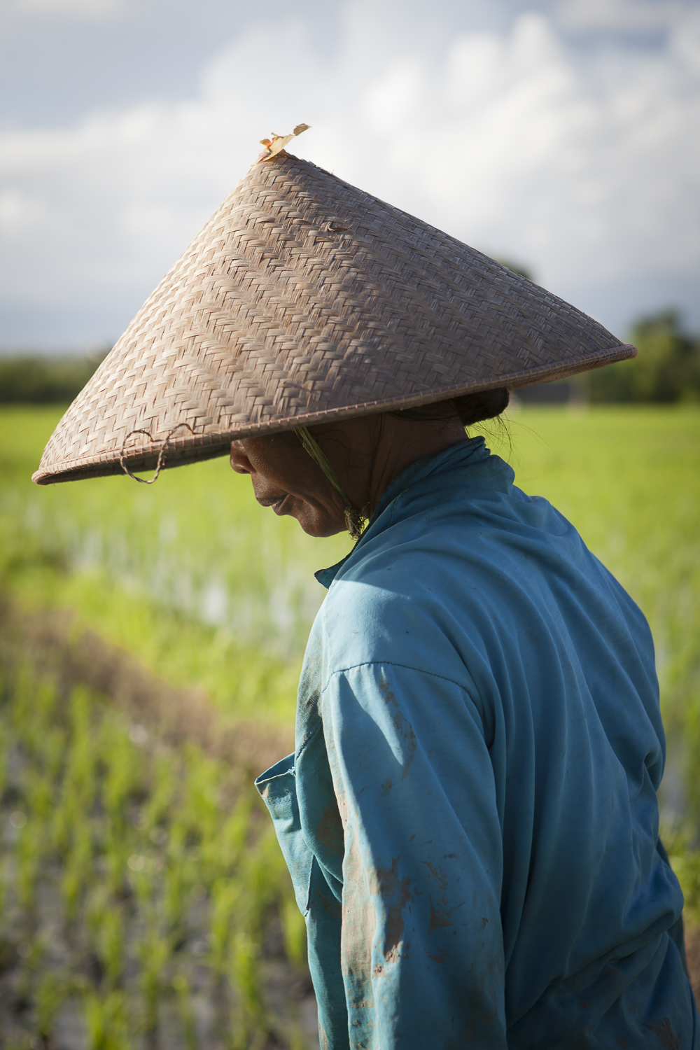 A woman tends to the rice fields of Tabanan near the temple of Tanah Lot, Bali, Indonesia