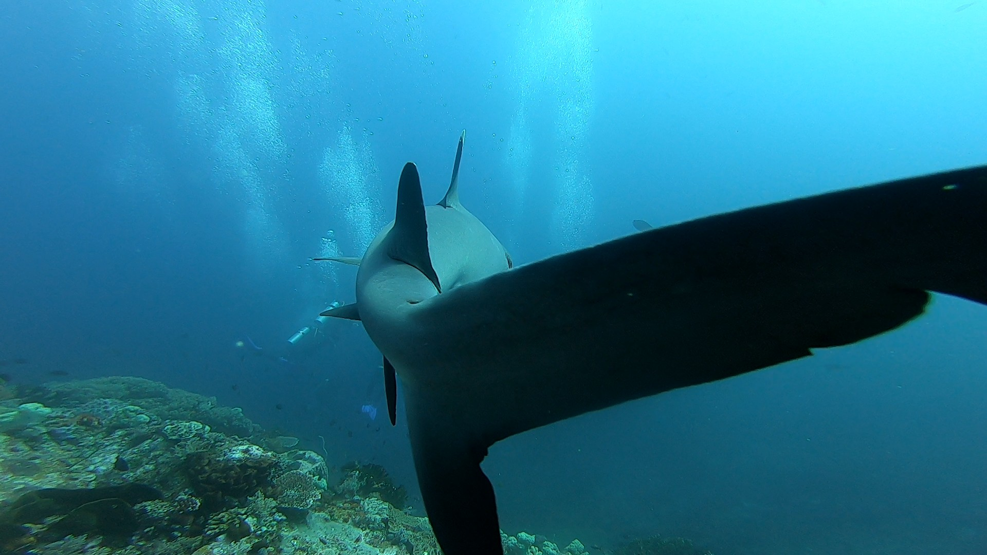 Requin sur Crystal Rock