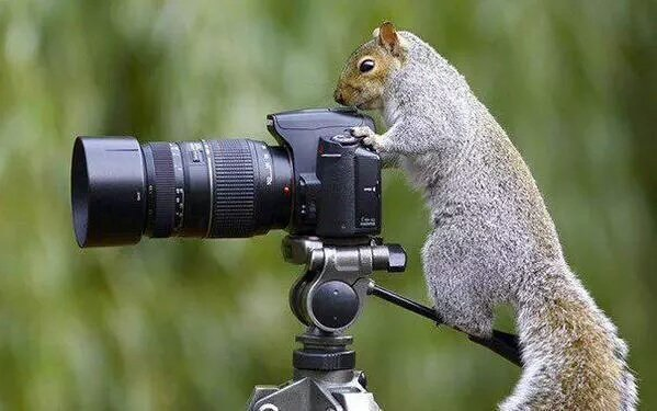 squirrel-snapper