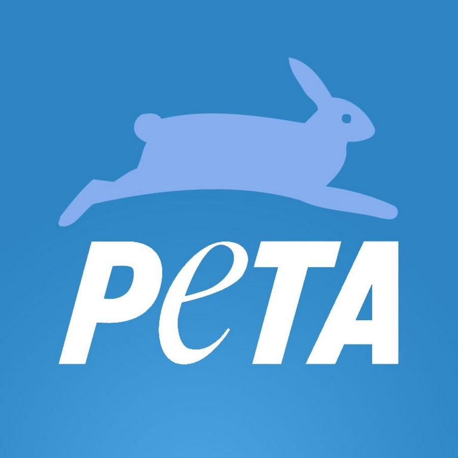 Animal rights essay intro Philosophy essay animal rights