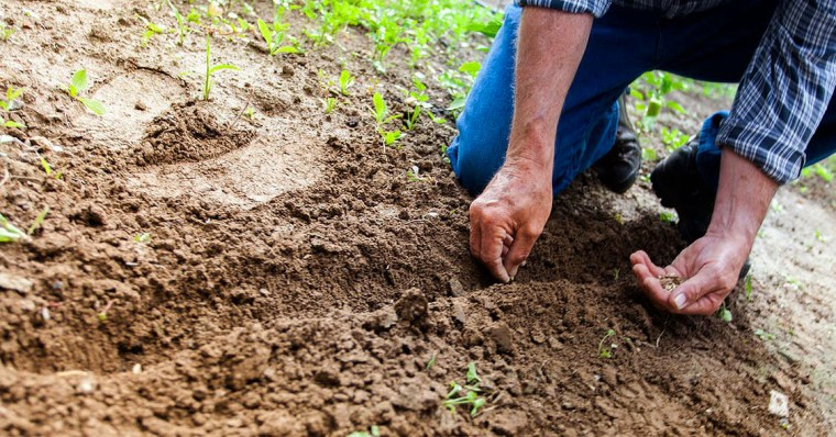 Photo of man planting seeds.