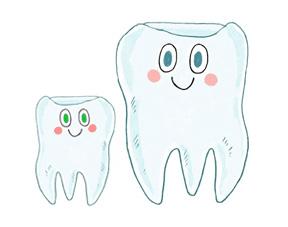 régénération des dents
