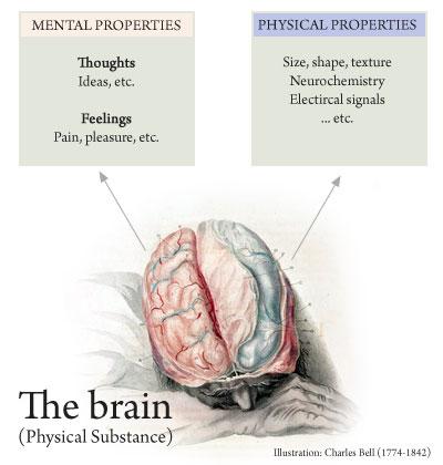 Mind brain identity theory yahoo