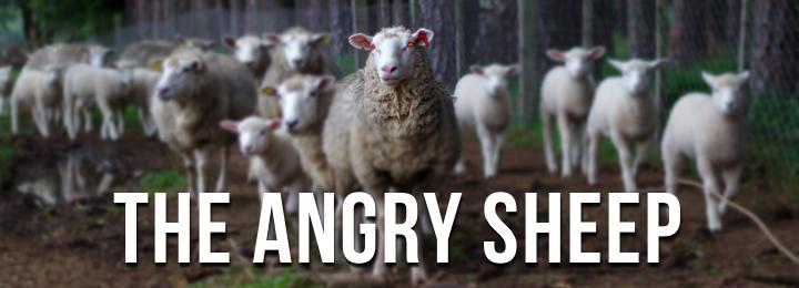 sheep-banner