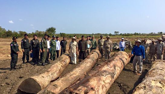 Authorities gather in a field around logs after they were unearthed during an investigation in Tbong Khmum province late last week. Photo supplied