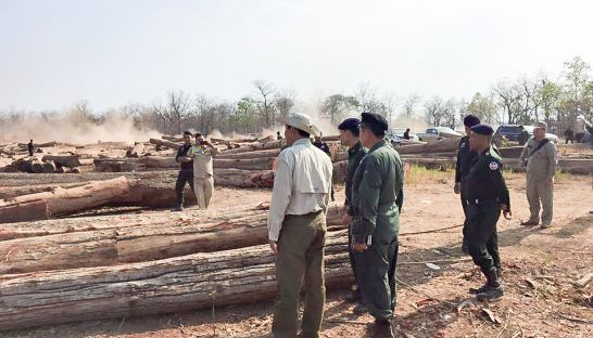 Authorities inspect timber in a Kratie province field on Tuesday as part of an ongoing crackdown on logging. Photo supplied