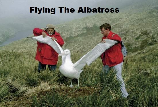 Flying The Albatross