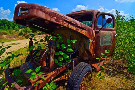 A rusting truck with hood agape awaits absorption by green surroundings.