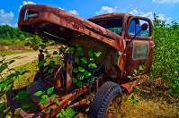 Conceptual – rusting truck mouth eating green plants