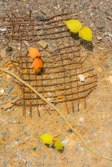 Graphic – Leafy sprouts emerge through grid of rusted wire