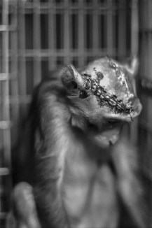 Life – sad monkey with stiched head